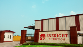 Eneright Dairy Factory - HACCP GMP Certification